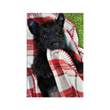 Scottish Terrier Puppy Play Rectangle Magnet