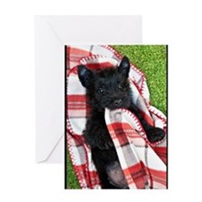 Scottish Terrier Puppy Play v2 Greeting Card