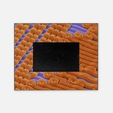 EPROM silicon chip, SEM Picture Frame