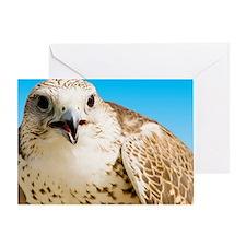 Female Arabian falcon Greeting Card