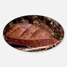 Female leaf-mimic bush cricket Sticker (Oval)