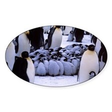 Emperor penguin chicks huddling Decal