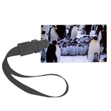 Emperor penguin chicks huddling Luggage Tag