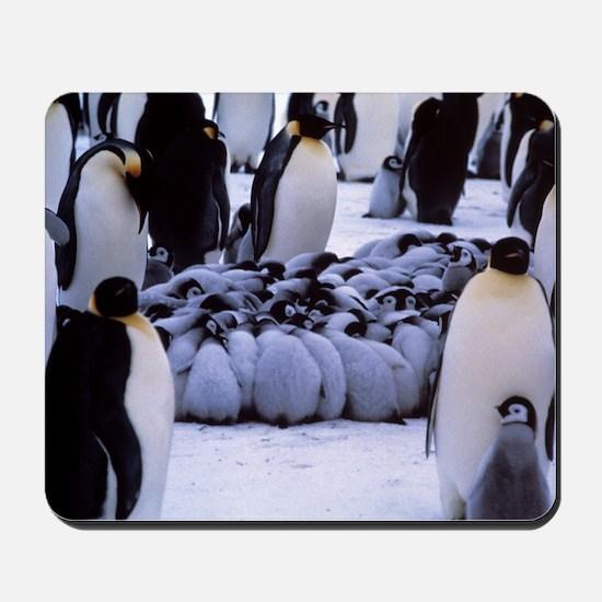 Emperor penguin chicks huddling Mousepad