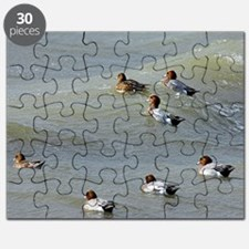 Eurasian wigeons Puzzle