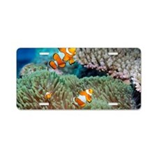 False clown anemonefish Aluminum License Plate