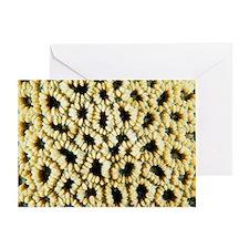 Faviid coral Greeting Card