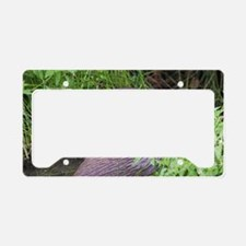 European otter License Plate Holder