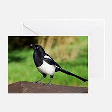European magpie Greeting Card