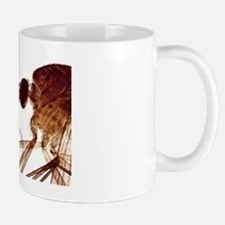 Female mosquito head, light micrograph Mug