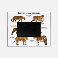 Tigers of the World Picture Frame