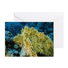 Fire coral Greeting Card