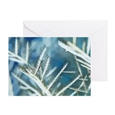 Fire hydroid Greeting Card