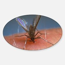 Feeding sandfly Sticker (Oval)