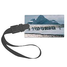Gentoo penguins Luggage Tag