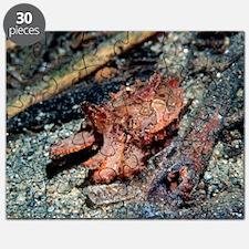 Flamboyant cuttlefish Puzzle