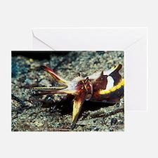 Flamboyant cuttlefish Greeting Card