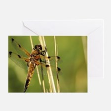 Four-spotted chaser dragonfly Greeting Card