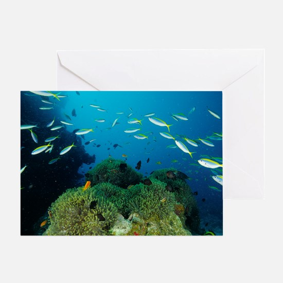 Fusilier fish Greeting Card