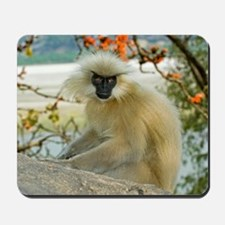 Golden langur monkey Mousepad