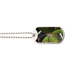 Glasswing butterfly Dog Tags