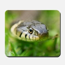 Grass snake Mousepad