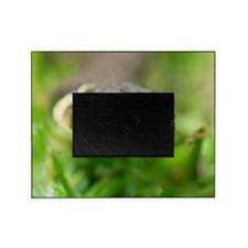 Grass snake Picture Frame