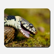 Grass snake feigning death Mousepad
