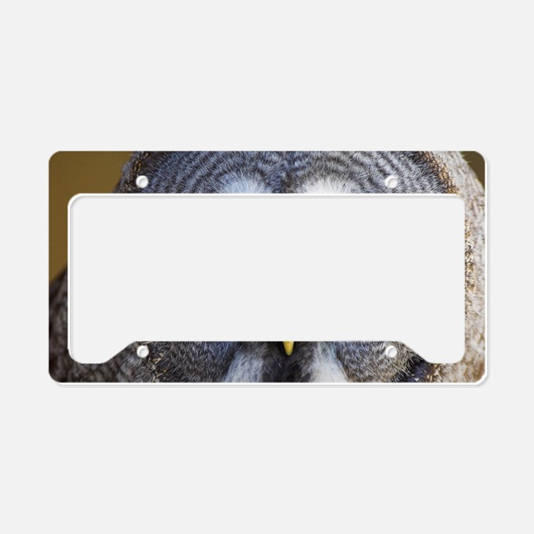 Great grey owl License Plate Holder