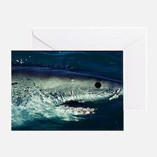 Great white shark Greeting Card