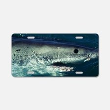 Great white shark Aluminum License Plate
