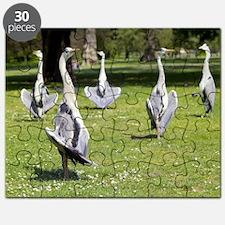 Grey herons Puzzle