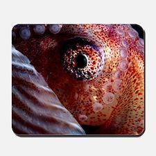 Greater argonaut eye Mousepad