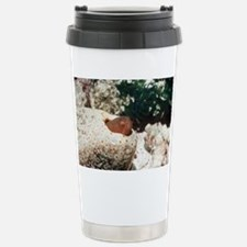 Graceful pearlfish Stainless Steel Travel Mug