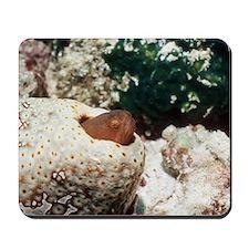 Graceful pearlfish Mousepad