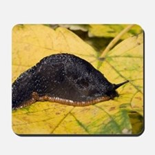 Great black slug Mousepad