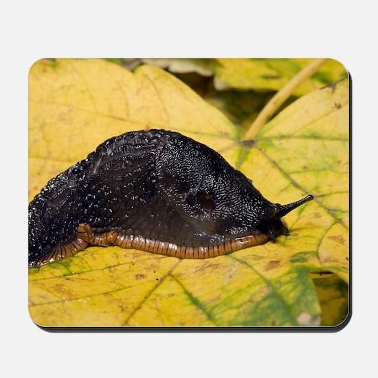 Great black slug Mousepad
