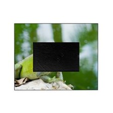 Green iguana Picture Frame