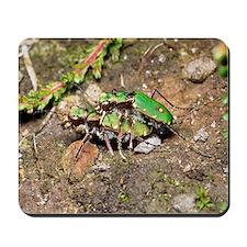 Green tiger beetles mating Mousepad
