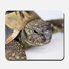 Hermann's tortoise head Mousepad