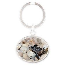 Hatching hawksbill turtle Oval Keychain