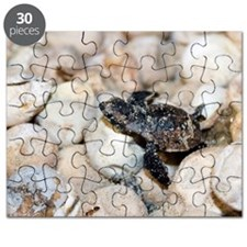 Hatching hawksbill turtle Puzzle