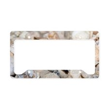 Hatching hawksbill turtle License Plate Holder