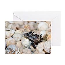 Hatching hawksbill turtle Greeting Card