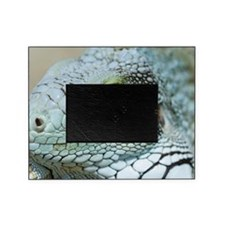 Head of a green iguana Picture Frame