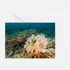 Leather coral Greeting Card