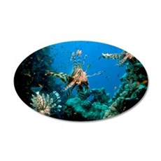 Lionfish on a reef 35x21 Oval Wall Decal
