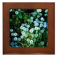 Alaska Flowers 9 Framed Tile
