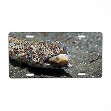Lizardfish with prey Aluminum License Plate