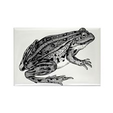 La Grenouille Rectangle Magnet
